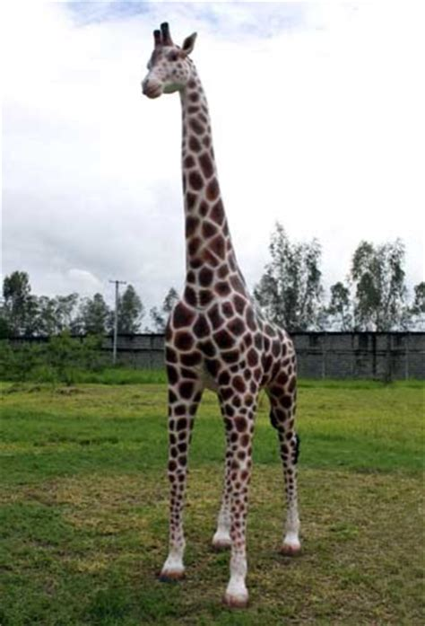 Giraffe Statue Home Decor giraffe life size statue 12ft