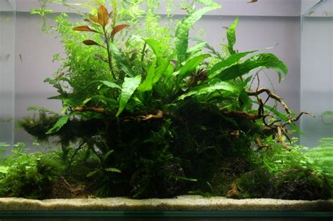 aquarium design ireland aquarium decorating ideas aquascapingdesire aquascaping