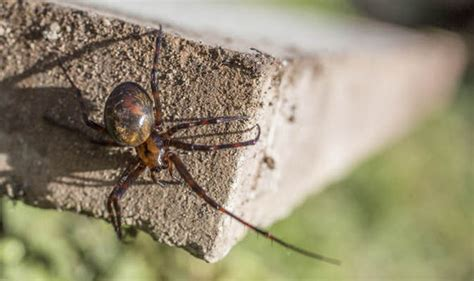 Keep Spiders Out Of Shed by Spiders World S Spider Proof Shed Launched Nature