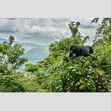 Mountain Gorilla Habitat | 2048 x 1367 jpeg 3079kB