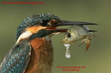 beautiful birds photo collection part 2 photo quotes