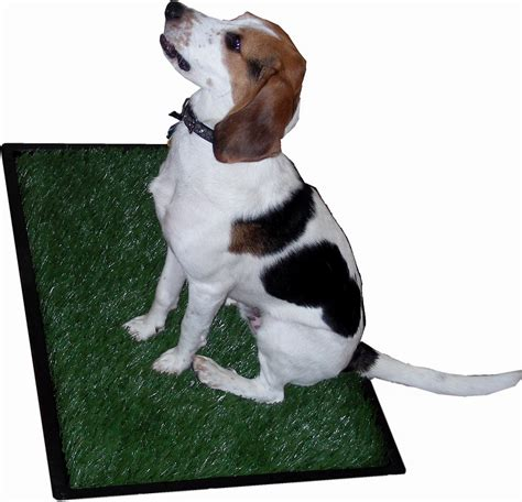 how to to use potty patch potty patch for pets free programs firstrutracker