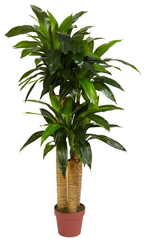 silk plants 4 corn stalk dracaena silk plant real touch tropical