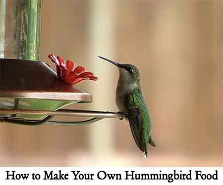 how to make your own hummingbird food lil moo creations