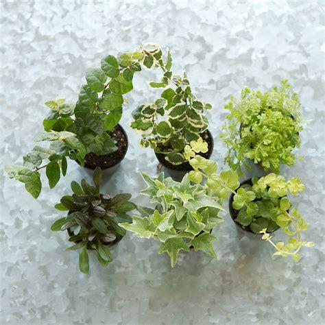 best small hanging plants terrarium plant collection hanging terrain