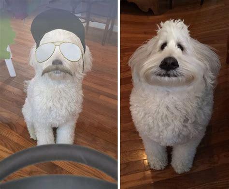 snapchat filters    funnier