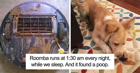 my dog poops in the house at night this is what one man learnt when roomba runs over dog poo in the middle of the night