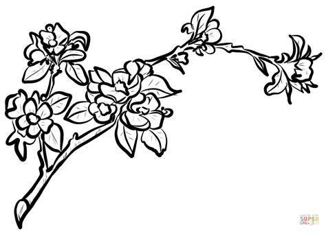 cherry blossom coloring pages apple blossom branch coloring page free printable