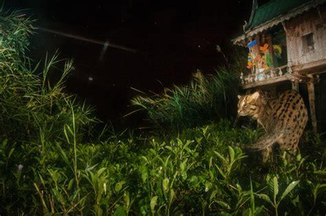 cat in backyard fishing cats the foolish girl s guide to success ewc