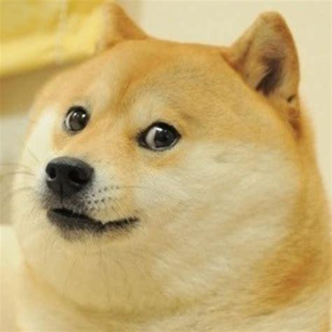 Doge Meme Generator - doge memes imgflip
