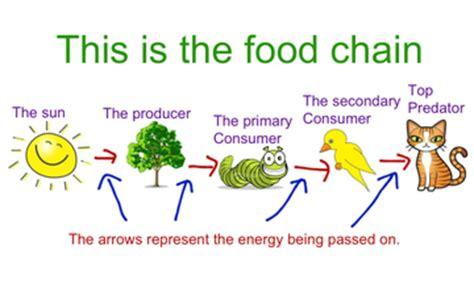 cadena alimenticia acuatica en ingles 3 3 lessons tes teach