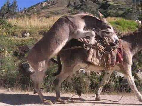 buro animal el burro