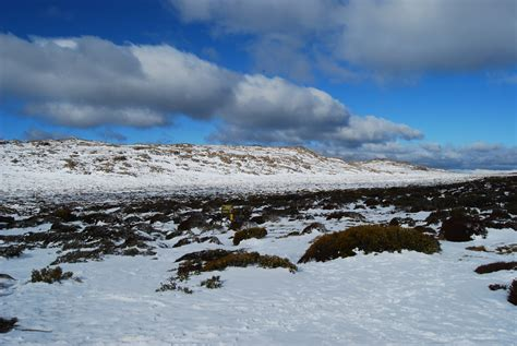 photos of snow file ben lomond snow fields jpg