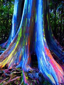 Worth Avenue the forest of rainbow trees amp world s most expensive bonsai