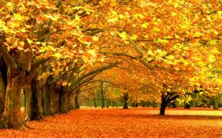 fall tree colors wallpaper 758638
