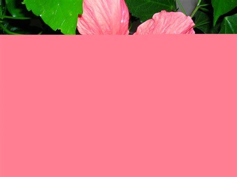 i fiori analisi fiori e natura archive tempi e metodi consulenze
