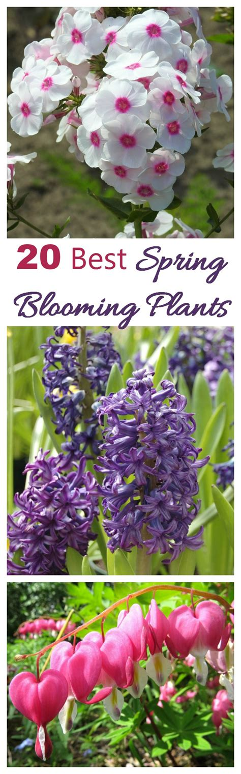 plants blooming spring blooming plants my 20 top picks for early spring