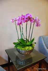 everything grows phalaenopsis orchid care