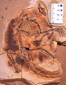 100 million years of food what our ancestors ate and why it matters today books mammal ancestors found secret of gliding 160m years ago