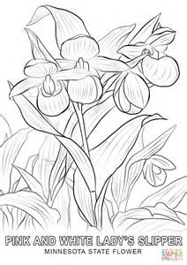 Free Search Mn Minnesota State Flower Coloring Page Free Printable Coloring Pages