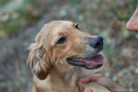 alimentazione cani piccola taglia cani taglia media cani taglia piccola cuccioli cuccioli