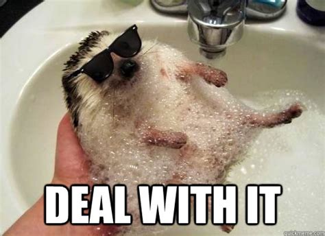deal with it hedgehog memes quickmeme