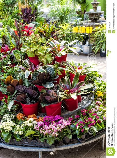 plants store plants for sale in nursery royalty free stock image image 31496586
