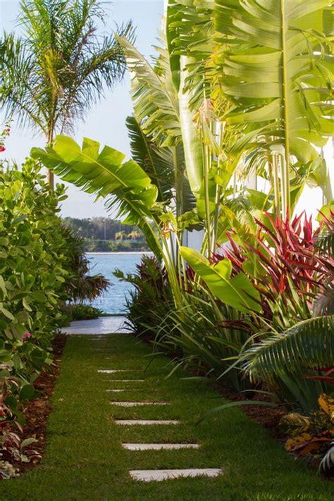 Tropical Backyard Gardens by Beautiful Tropical Bananas Tree Garden Patio Landscape Tropical Tree Garden