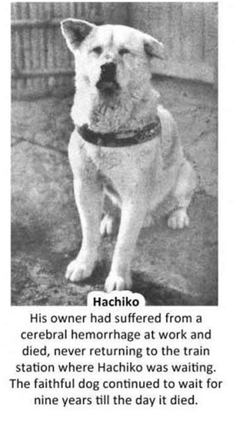 The Story Of Dogs hachiko waited for his owner to return to the
