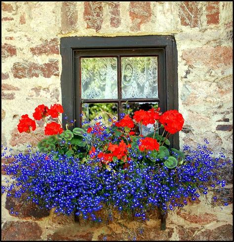 win with flower 8 beautiful window box planter ideas