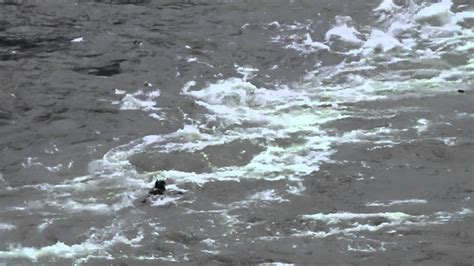 idaho boat races riggins jet boat races 2012 yochum 225 crashes into