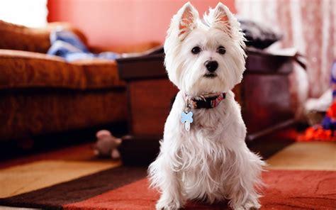 4 pasos para conseguir un alojamiento exitoso para perros
