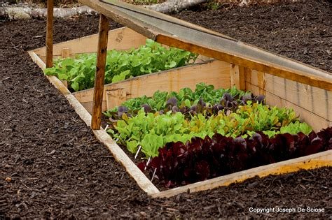 How To Grow Vegetables All Year Long Even In Winter Vegetable Garden In Winter