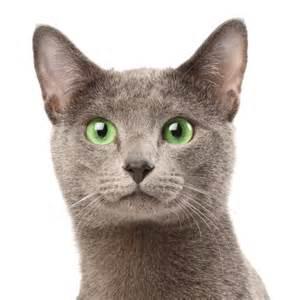 hygi 232 ne des oreilles du chat entretien bouche