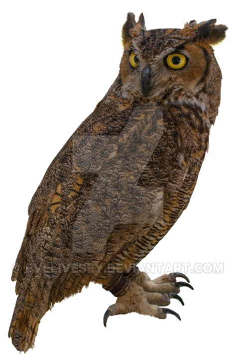 owl tattoo png owl png by evelivesey on deviantart