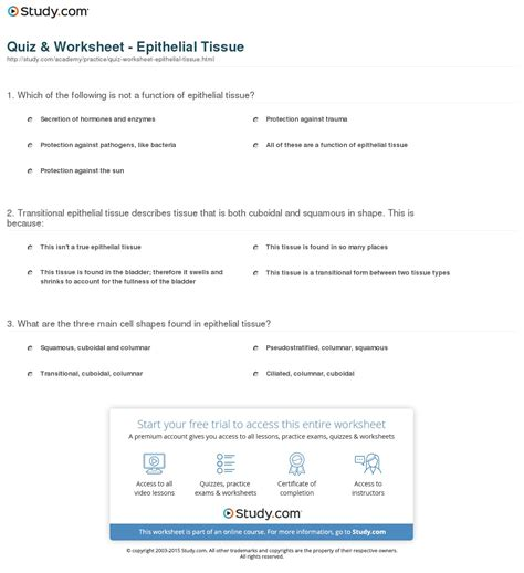 Tissue Worksheet Answers by Worksheets Epithelial Tissue Worksheet Opossumsoft