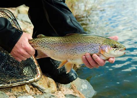and fish nm winter fish new mexico department of fish