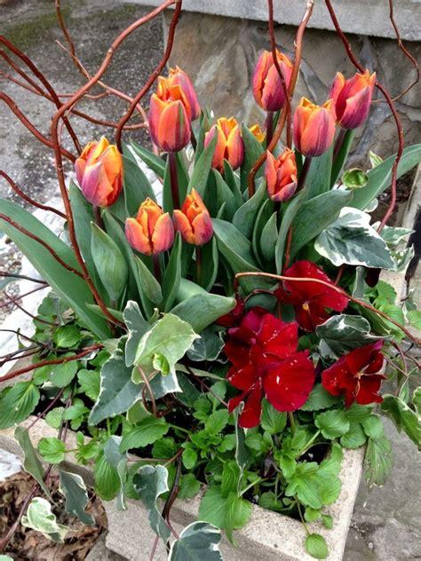 Tulip Planter by Planter Combo Orange Wine Toronto Gardens