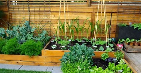 Small Veggie Garden Ideas Small Vegetable Garden Design Ideas