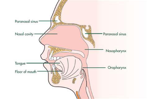 sinus diagram back of skull in sinus cavity locations skull get free image