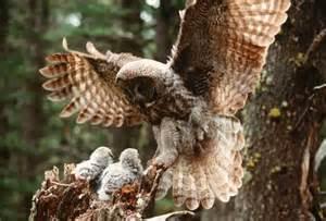 owl homes s home owls photo 9349596 fanpop
