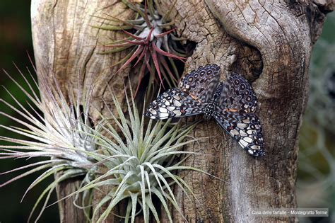 la casa delle farfalle montegrotto a montegrotto terme la casa delle farfalle l astrolabio