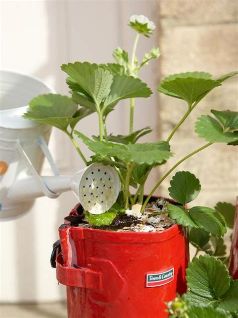 container gardening strawberries 1000 images about boot planters on gardens