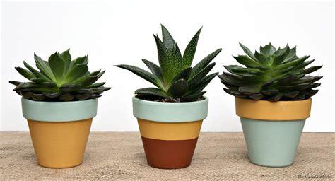 succulent pots mint mustard painted succulent pots plus free spring