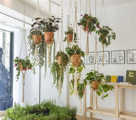 jenis tanaman hias gantung cocok  hiasan rumah