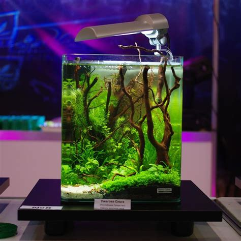 aquarium design photos best 25 nano aquarium ideas on pinterest nano tank