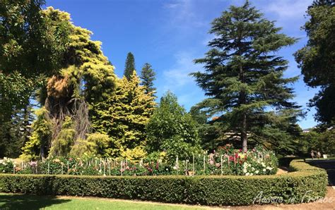 botanic gardens of adelaide adelaide botanic gardens aussie in