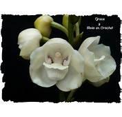 Flor Nacional De Mi Pais Su Nombre Es LA FLOR DEL