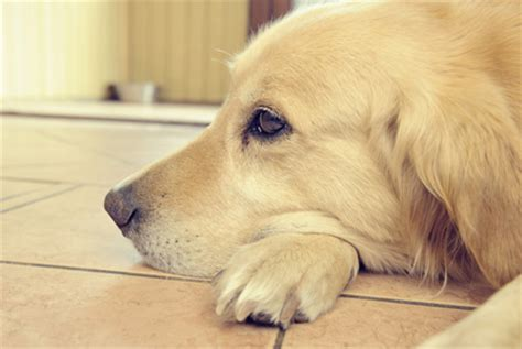 depression in dogs is depression in dogs real