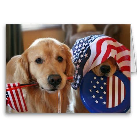 golden retriever flags flag day golden retriever dogs photo and wallpaper beautiful flag day golden